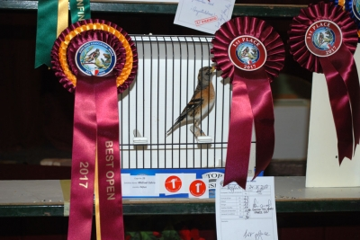 Michael Zahra Best Open Finch (1st Chaffinch)_1